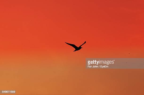 Bird Flying Against Orange Sky