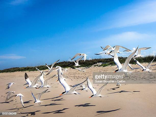 Bird Flying At Beach Against Blue Sky