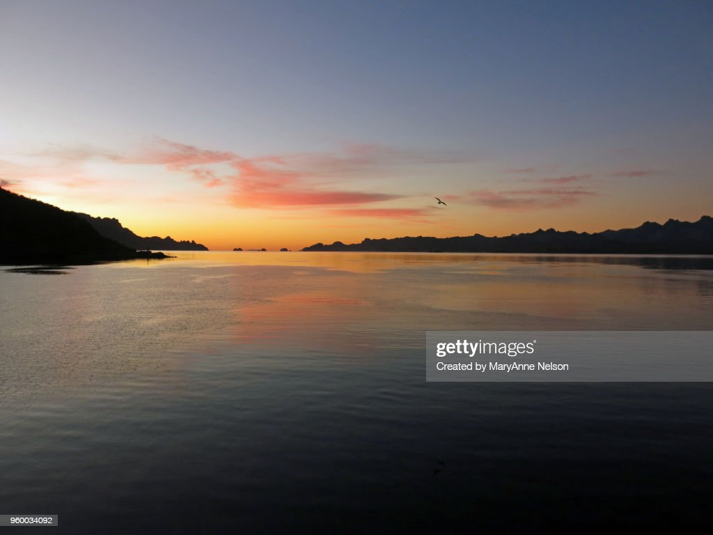 Bird Flying at Sunrise with Sky, Water and land : Stock-Foto