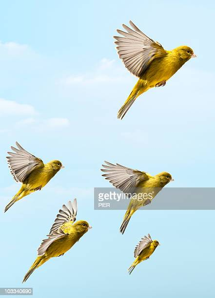 Bird flying higher and faster than other birds