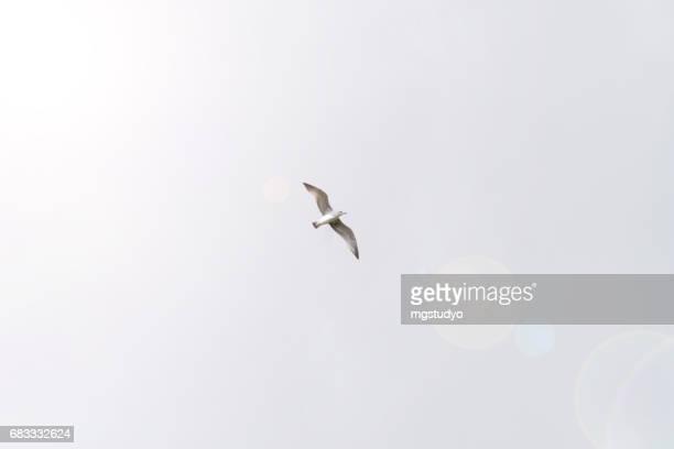 Fågel som flyger på himlen