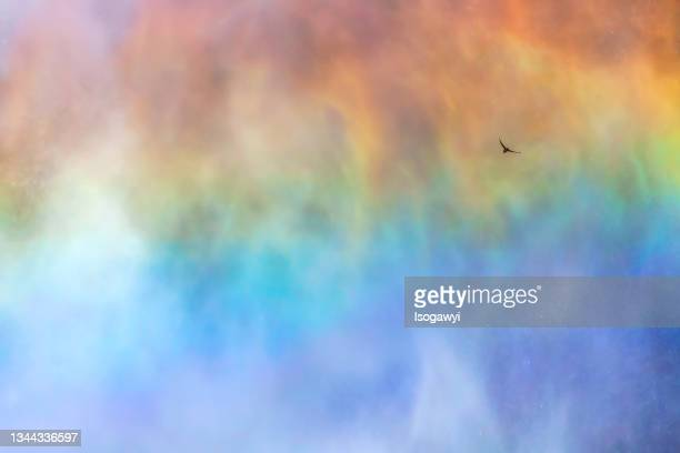 a bird flying into rainbow - isogawyi stock pictures, royalty-free photos & images