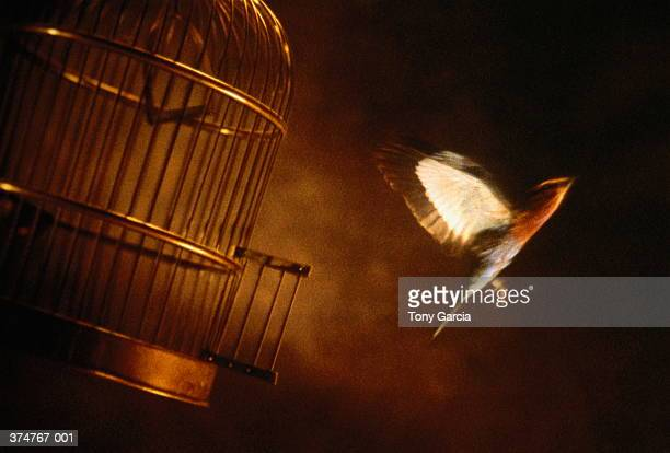 Bird flying out of cage (blurred motion)