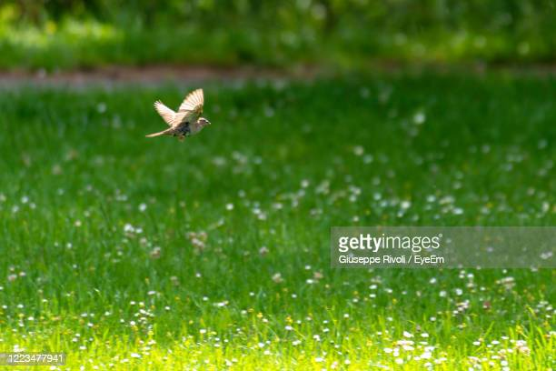 bird flying over a land - nightingale stock pictures, royalty-free photos & images