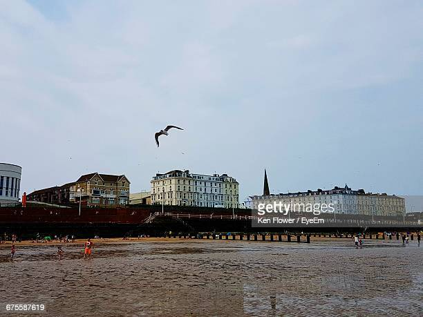 bird flying over beach by buildings against sky - bridlington stock pictures, royalty-free photos & images