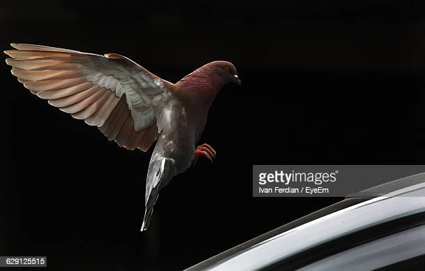 Bird Flying Over Car Against Clear Sky At Night
