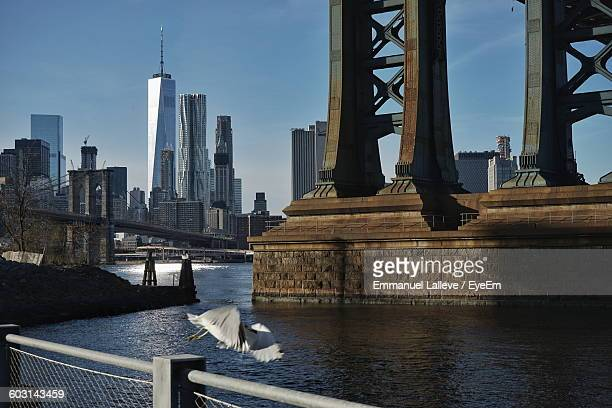 Bird Flying Over East River By Bridges And One World Trade Center Against Sky