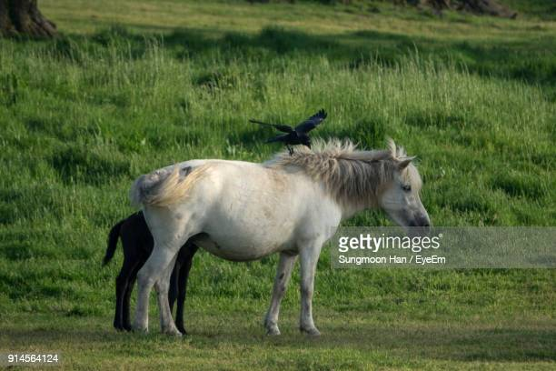Bird Flying Over Horse And Infant Standing On Field