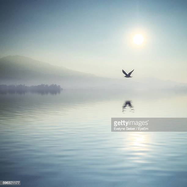 Bird Flying Over Lake Against Sky During Foggy Weather