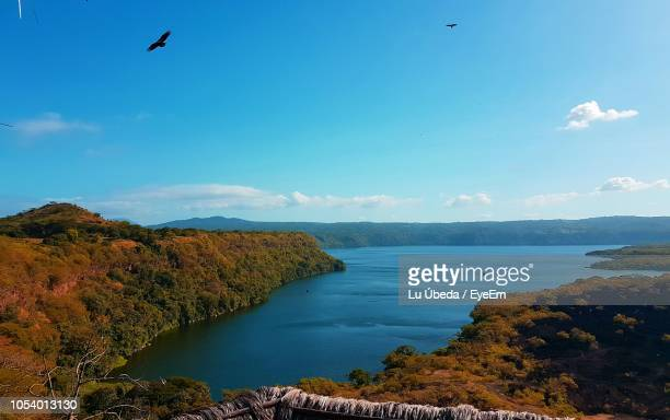 bird flying over lake against sky - managua stock pictures, royalty-free photos & images