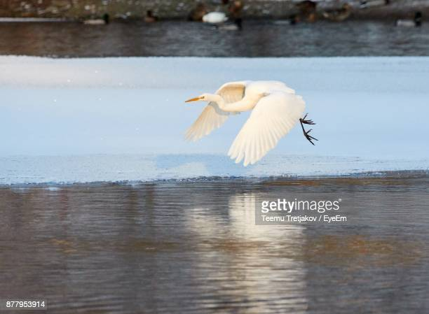 bird flying over lake - teemu tretjakov stock pictures, royalty-free photos & images