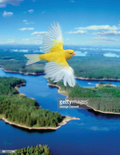 Bird flying over landscape
