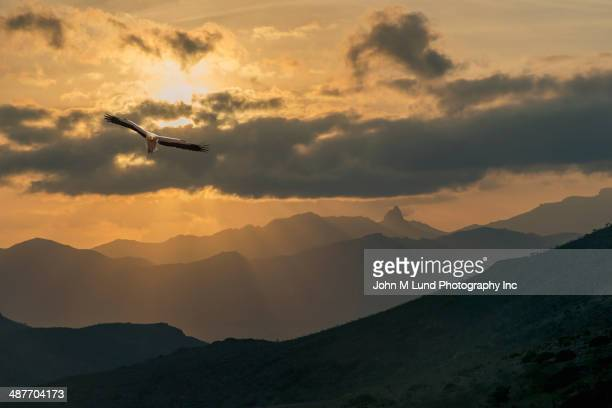 Bird flying over mountains at sunset
