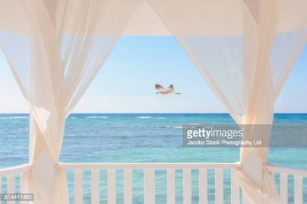 Bird flying over ocean viewed from balcony