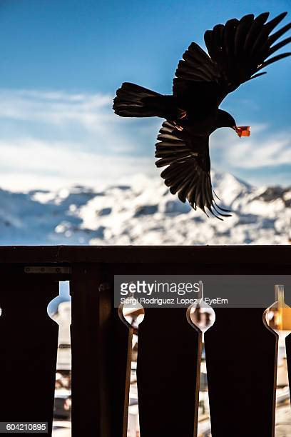 bird flying over railing against mountain - lopez stock pictures, royalty-free photos & images