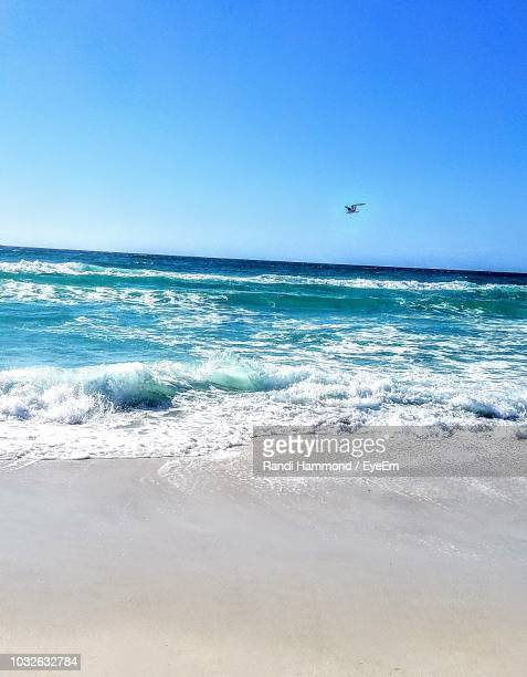 bird flying over sea against clear blue sky - panama city beach stock pictures, royalty-free photos & images