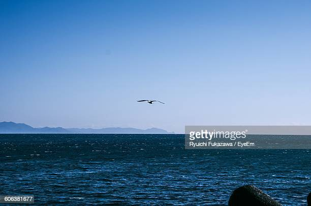 bird flying over sea against clear blue sky - 静岡市 ストックフォトと画像