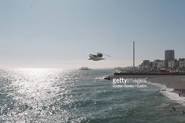 Bird Flying Over Sea Against Clear Sky On Sunny Day In City