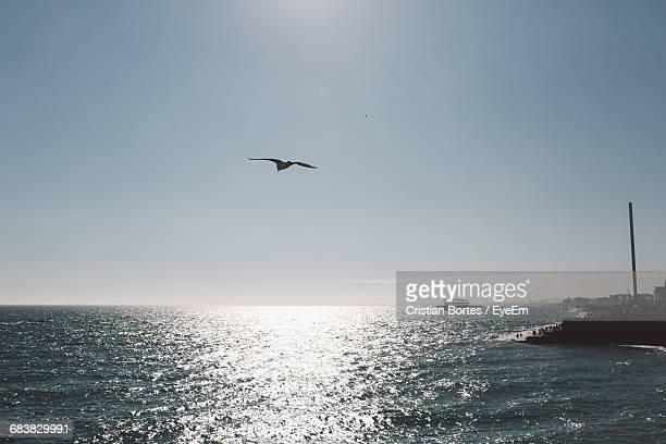 bird flying over sea against clear sky on sunny day - bortes stock pictures, royalty-free photos & images