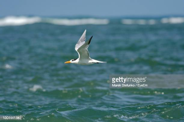 bird flying over sea - marek stefunko - fotografias e filmes do acervo
