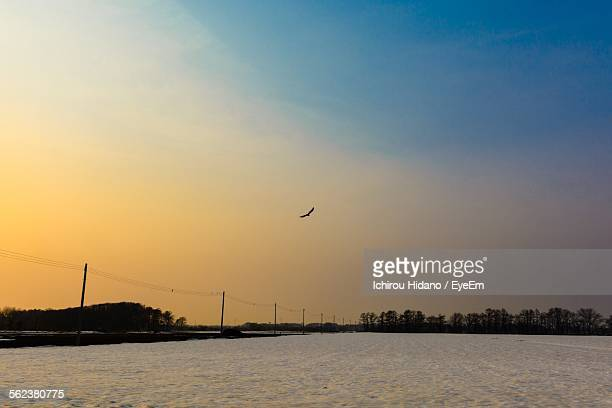 Bird Flying Over Snow Covered Field Against Sky During Sunset