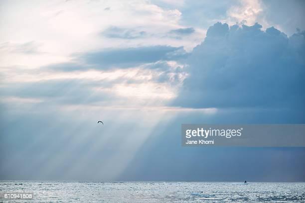 Bird Flying over Sun Rays