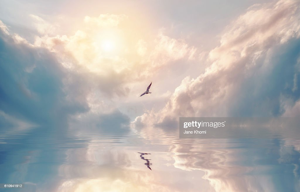 Bird Flying over Sun Rays : Stock-Foto