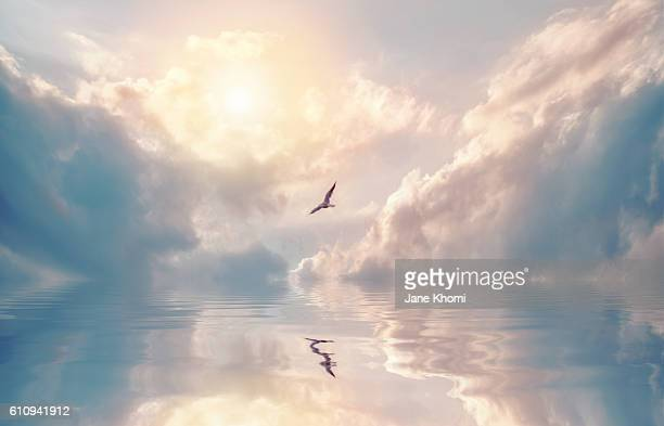 bird flying over sun rays - dramatic sky stock pictures, royalty-free photos & images
