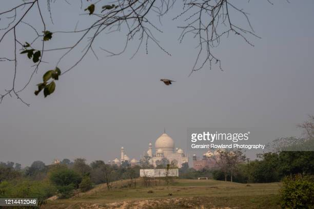 bird flying over the taj mahal - celebrity death stock pictures, royalty-free photos & images