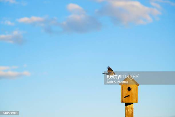Bird flying to wooden birdhouse against blue sky