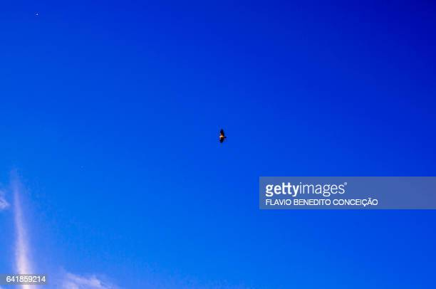 bird flying with blue sky rural scene - azul turquesa stockfoto's en -beelden