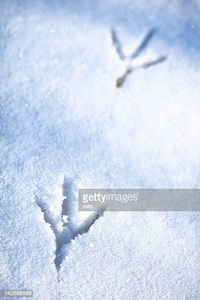 Bird foot traces in snow