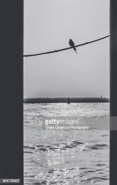 Bird hanging by a thread waiting to fly
