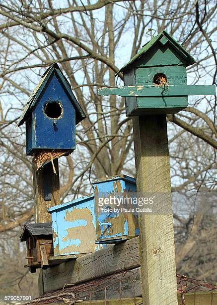 Bird House Community