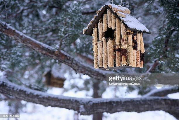 Bird house made of corn cobs which doubles as a shelter and food supply for winter birds in Flagstaff Arizona