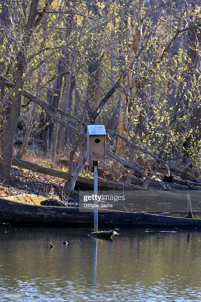 Bird house near the pond : Stock Photo