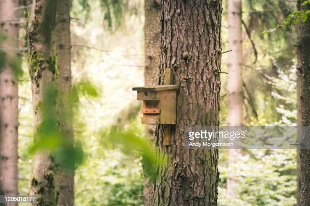 bird house on tree in forest - vogelhäuschen stock-fotos und bilder