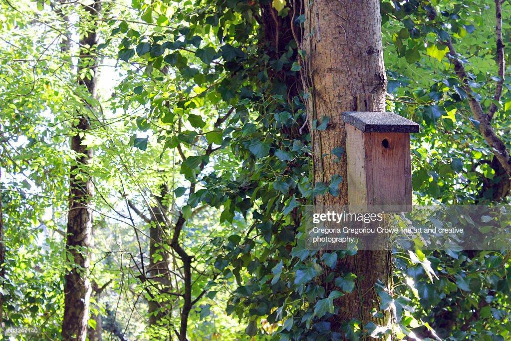 Bird House On Tree : Stock Photo