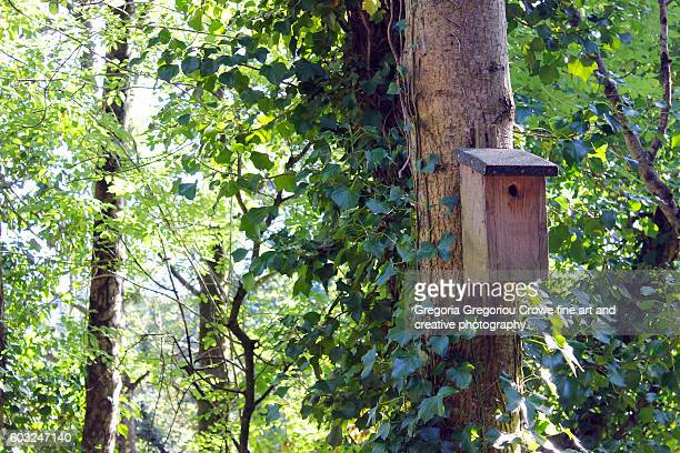 bird house on tree - gregoria gregoriou crowe fine art and creative photography fotografías e imágenes de stock