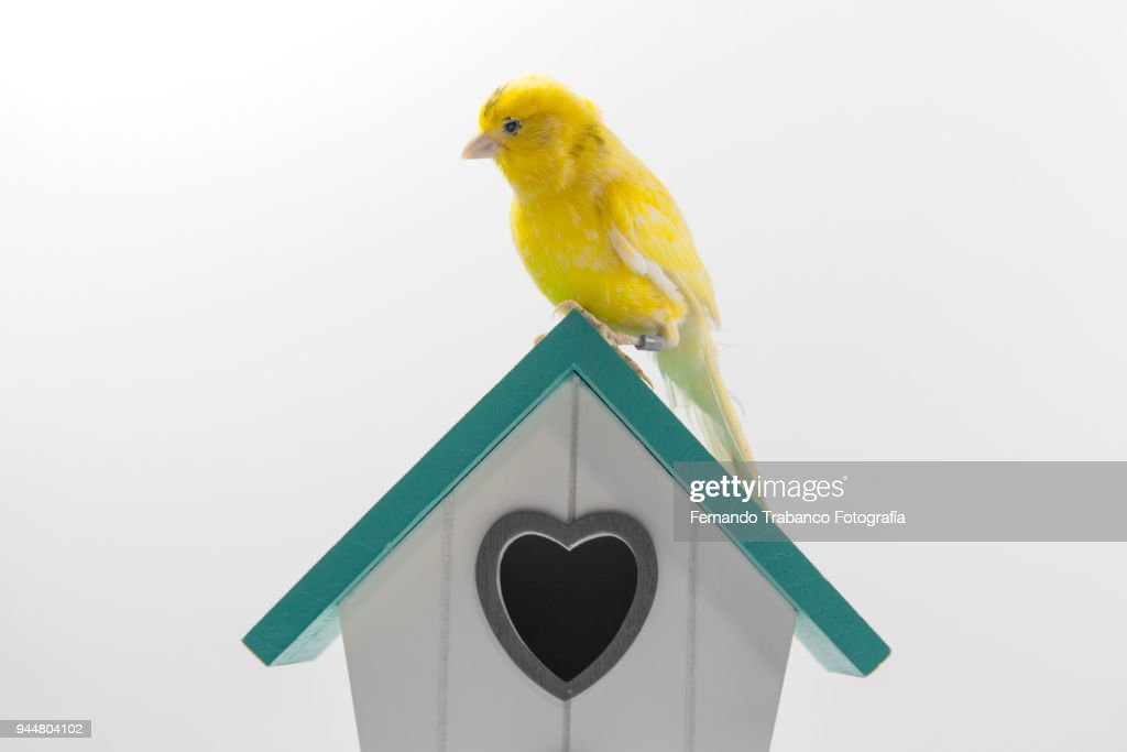 Bird house : Stock Photo