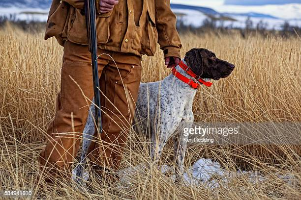 bird hunter with dog - trained dog stock pictures, royalty-free photos & images