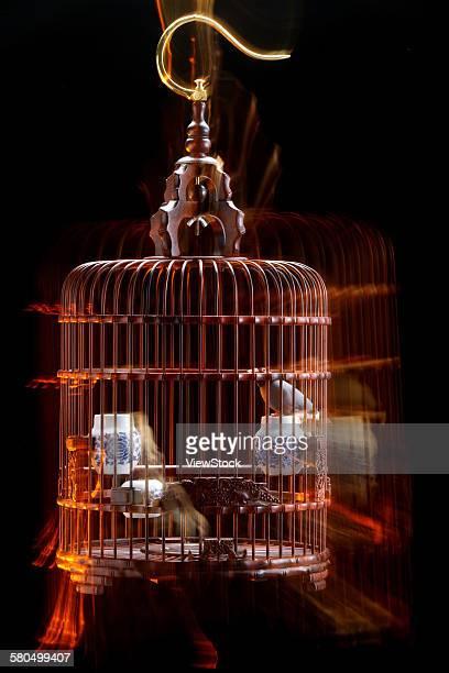 Bird in a birdcage