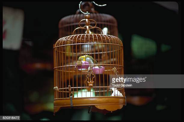 bird in birdcage - gipstein stock pictures, royalty-free photos & images