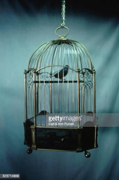 Bird in Birdcage
