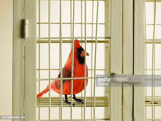Bird in cage, close-up