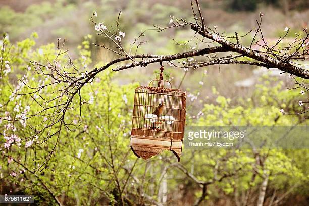 Bird In Cage Hanging On Branch