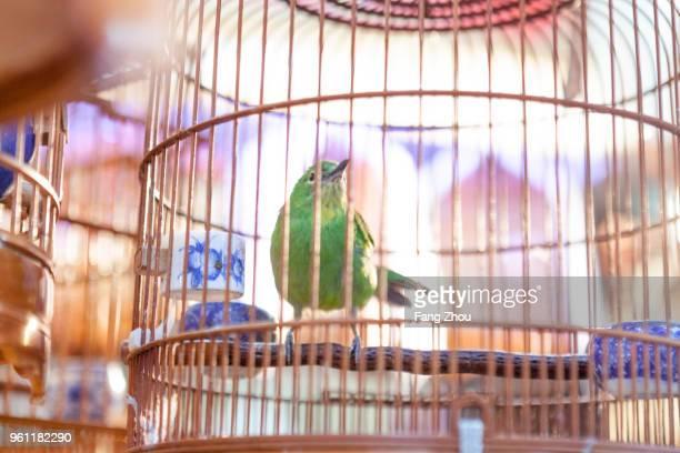 bird in copper birdcage, hong kong, china, east asia - animales en cautiverio fotografías e imágenes de stock