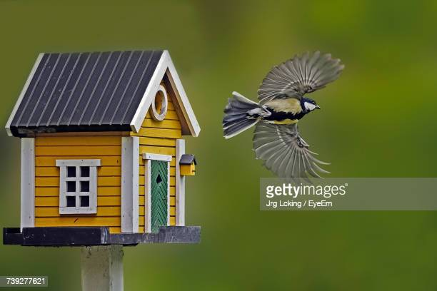 bird in flight - birdhouse stock pictures, royalty-free photos & images