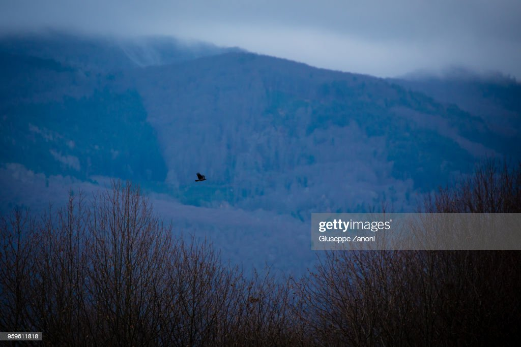 Bird in flight : Stock-Foto