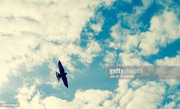 Bird in flight through clouds